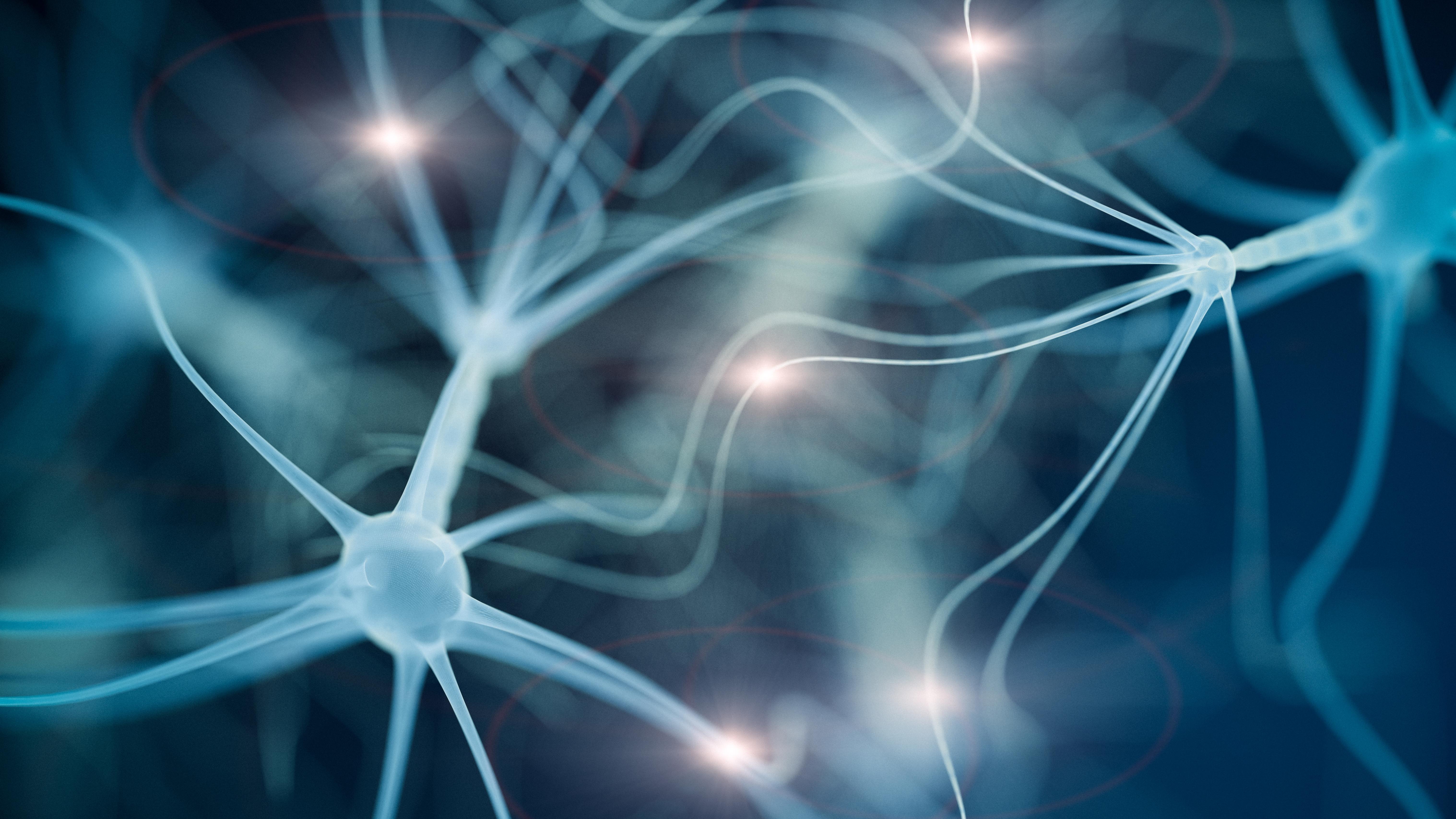 Mammalian Neurons